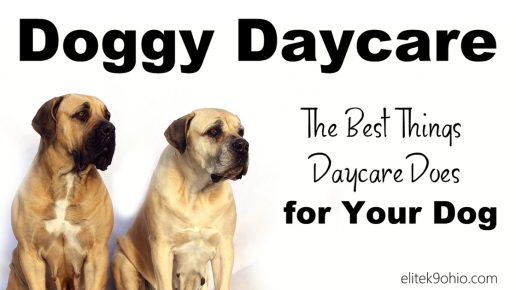 The Best Things Doggy Daycare Does For Your Dog