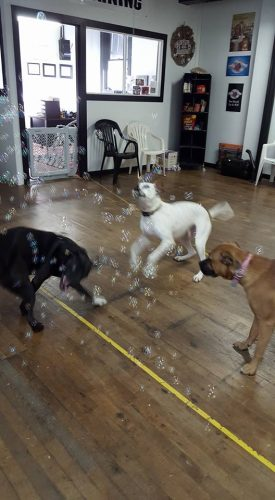 Buuuubbbbbles!!! Bubbble fun at doggy daycare.