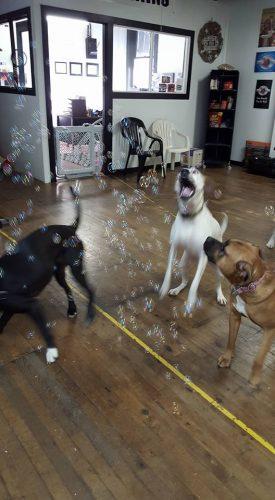 These dogs like to play with bubbles!