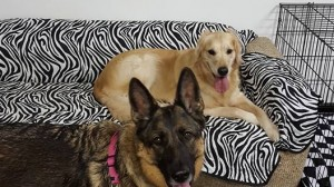 Our Happy Doggy Daycare Clients