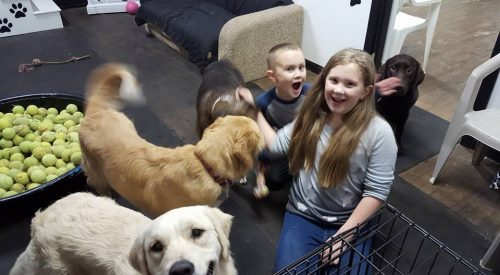 Dogs and kids having fun together