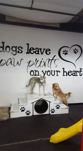 Dogs leave paw prints on your heart.