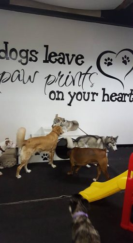 dogs-leave-pawprints-3