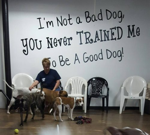 Wall Image: I'm not a bad dog, You never trained me to be a good dog!
