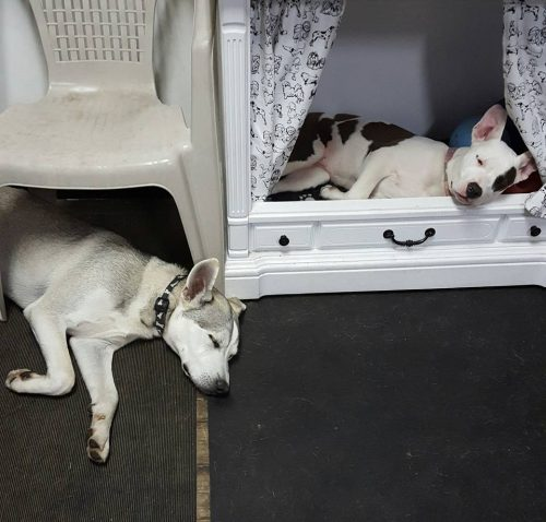 Nap time at Elite K-9 Doggy Daycare