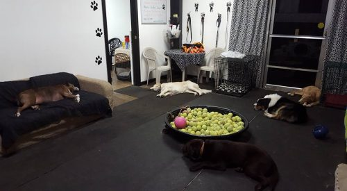 Napping dogs at doggy daycare - it does happen!