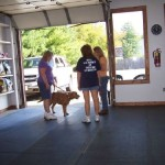 obedience-training-2