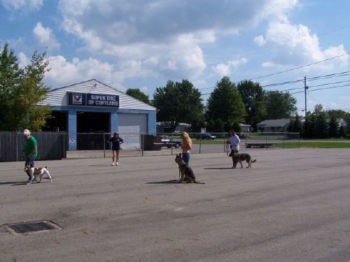 outdoor-obedience-class