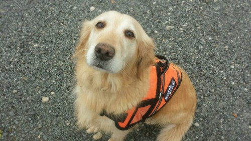 Peyton is a retired search dog from Ohio.