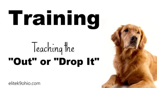 "Teaching the ""Out"" or ""Drop It"" Command"