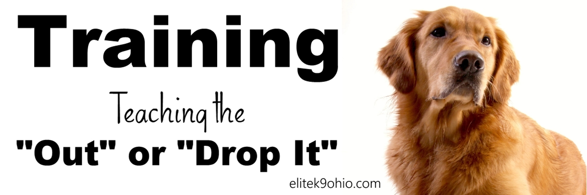 "Training your dog - teach the ""out"" or ""drop it"" command."