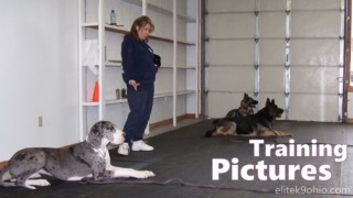 Pictures from dog training with Elite K9 in Warren & Cortland, Ohio.