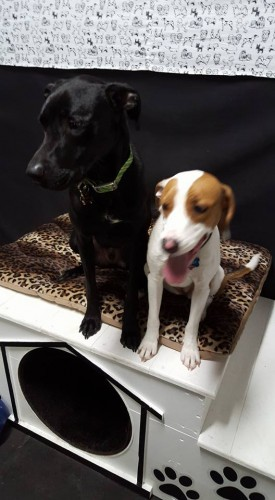 two-dogs-at-daycare-together