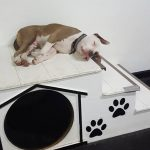 Sleeping puppy on stairs